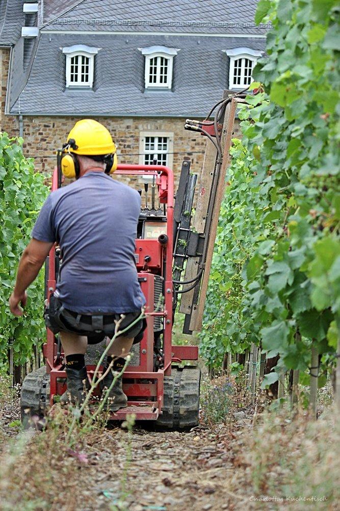 Arbeiter im Weinberg, Rotweinwanderweg