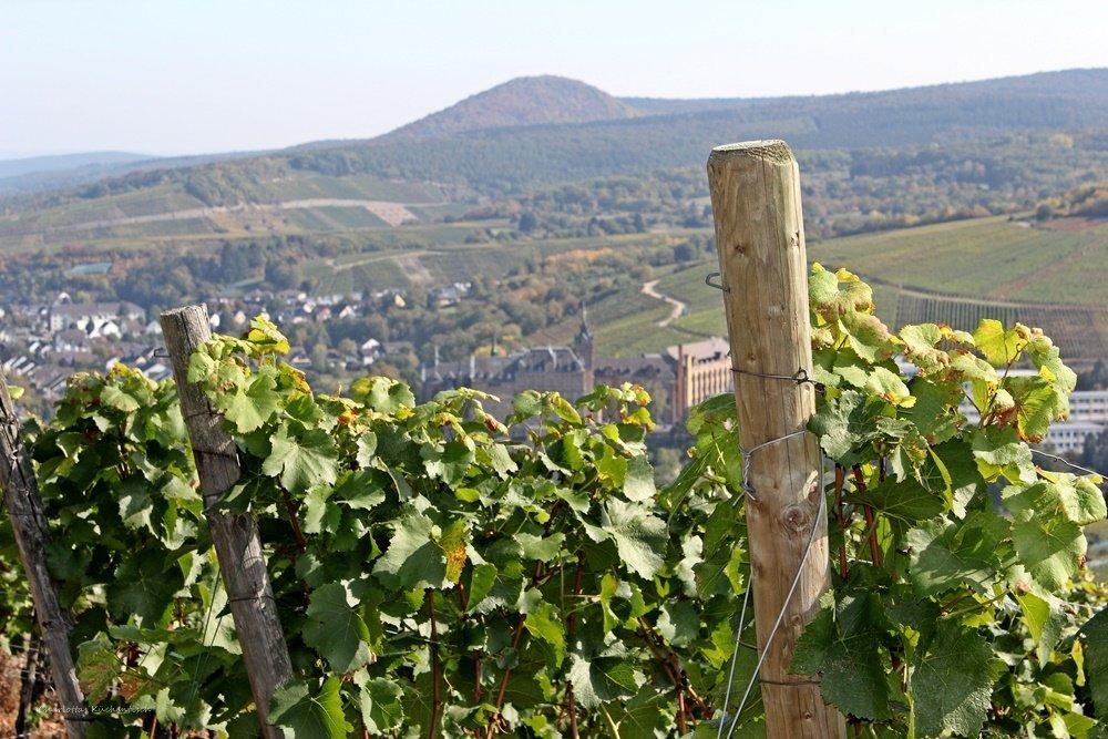 Rotweinwanderweg, Blick auf Ahrweiler