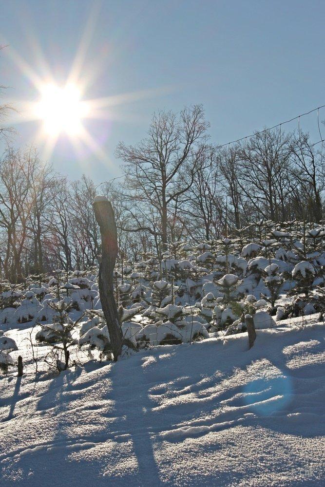 Wandern im Schnee, Sauerland, Wanderweg, A6, Altenhellefeld, Wacholderheide, Wandern, Schneewanderung