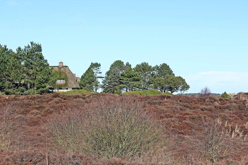 Braderuper Heide, Sylt, Spaziergang, Winter, Heide, Schleswig Holstein, Geheimtipp