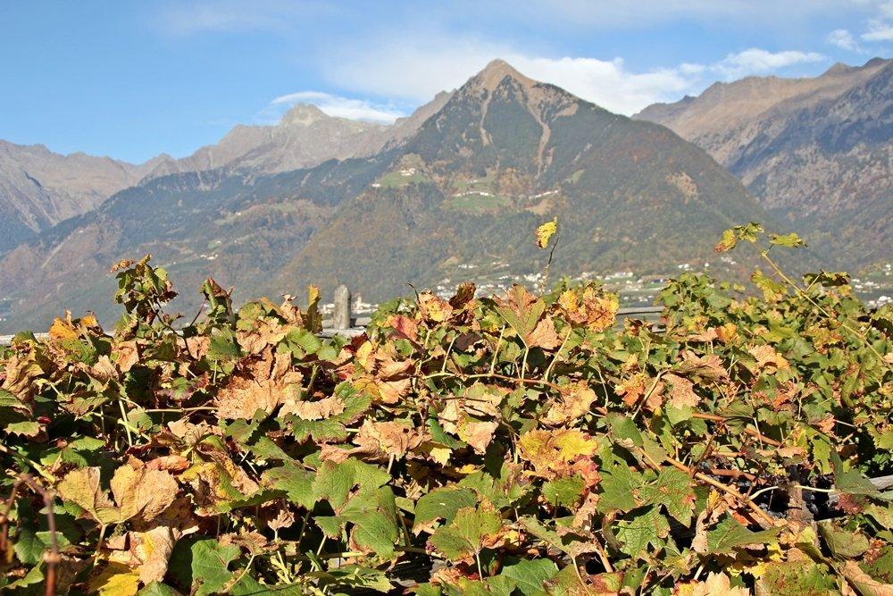 Herbsttage in Südtirol – Törggelen und Wandern in Schenna