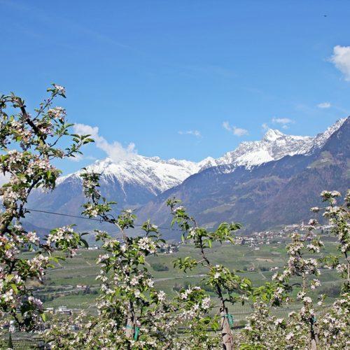 Was sollte man in Südtirol unbedingt gemacht haben - 9 tolle Reisetipps