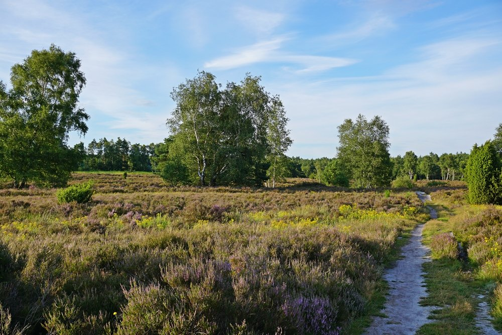 Behringer Heide - ein Geheimtipp in der Lüneburger Heide - Urlaubshappen