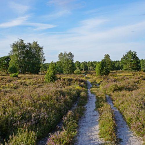 Behringer Heide - ein Geheimtipp in der Lüneburger Heide