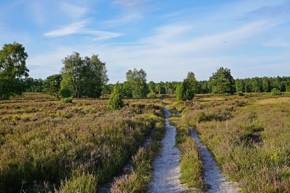 Behringer Heide – ein Geheimtipp in der Lüneburger Heide